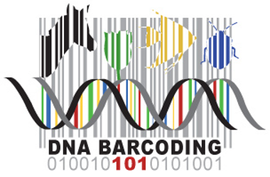 dna barcoding thesis Dna barcoding and related molecular markers for fish first species level study focused on the validation of dna barcoding using dna markers have been widely.